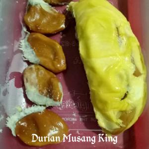 Jual Bibit Durian Musang King Dari Bogor Ke Duren Sawit Jakarta Timur | WA 0812-8391-8007